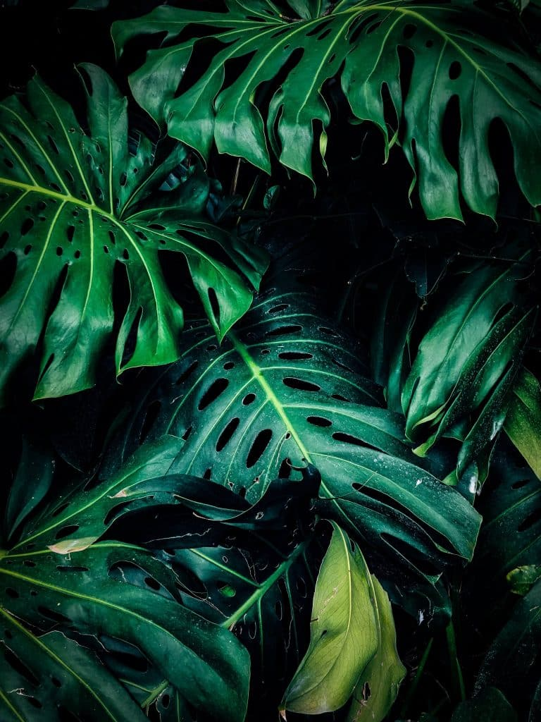 Image of green leaves for contact me page
