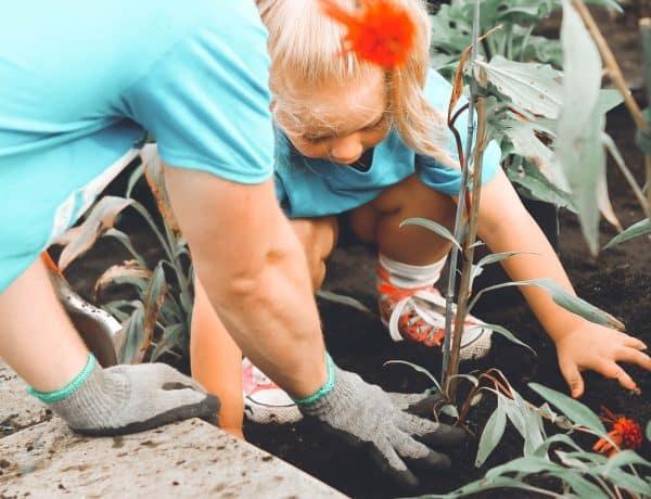 Image of flowering tree being planted in brisbane