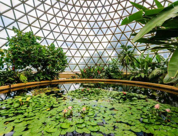 Image of brisbane landscape design Mt cootha botanic gardens