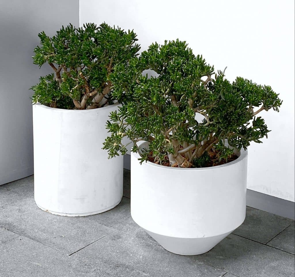 image of two contemporary pot plants